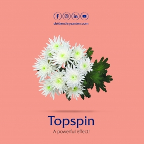 Topspin Tros folder
